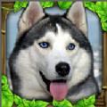 流浪狗模拟器汉化版