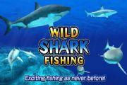 野生鲨鱼捕鱼已经上线 少年捕捉鲨鱼的重任就交给你了[多图]