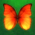 消灭蝴蝶游戏