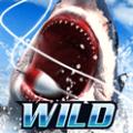 野外捕鱼模拟