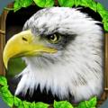 老鹰模拟器2游戏