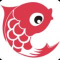 红鲤看点APP手机版下载 v1.0