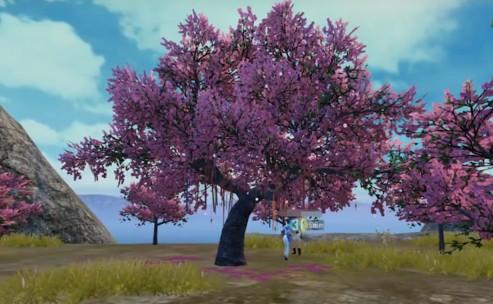 和平精英七夕樱花树怎么打卡?七夕樱花树打卡方法[多图]