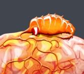 瘟疫公司神经蠕虫玩法介绍 虚构的病原体[图]