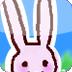给兔子拍照