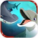 食人鲨:海豚的崛起
