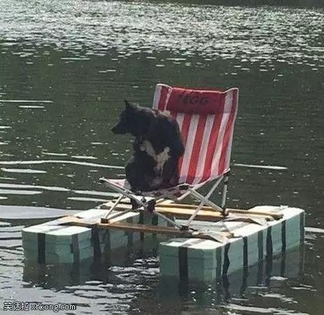 搞笑图片:北极熊的枪法可不是闹着玩的![多图]图片6